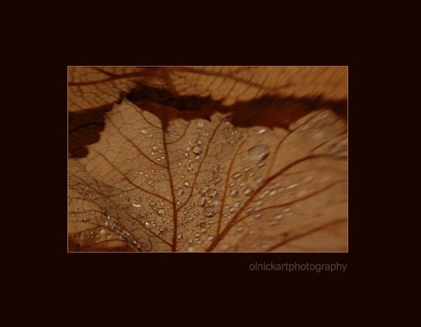 leaves-lensbaby by beriah
