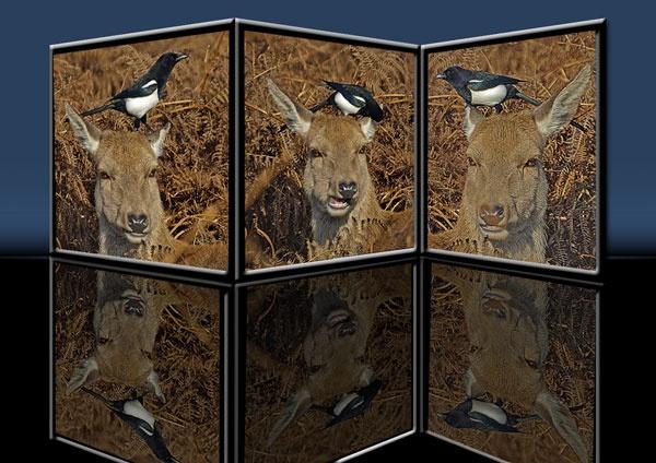deers by whiteswan01