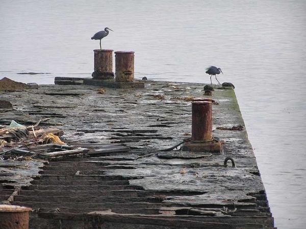 Wrecked barge with herons by ianofarabiaz