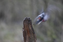 Hooo its out of focus.!!