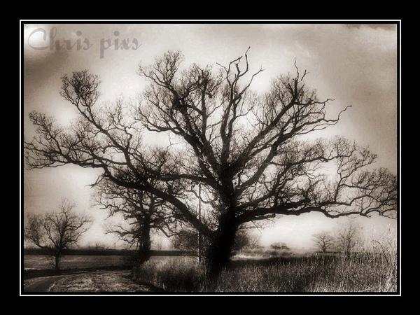 winter tree by chrisg7syt