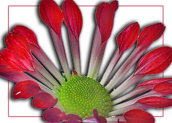 Flower by hellsbells8868