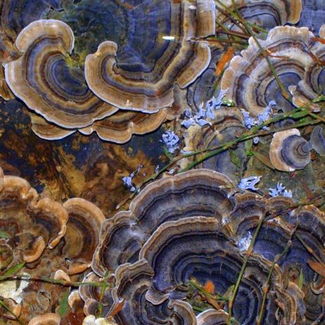 fungi by stellabella