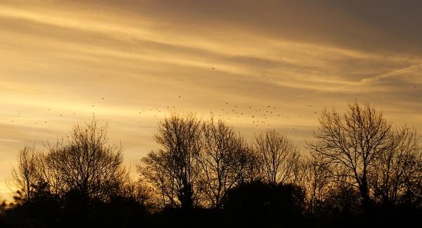 Early Morning Flight by DebbieBMP
