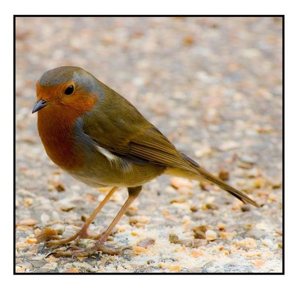 Robin Take 2