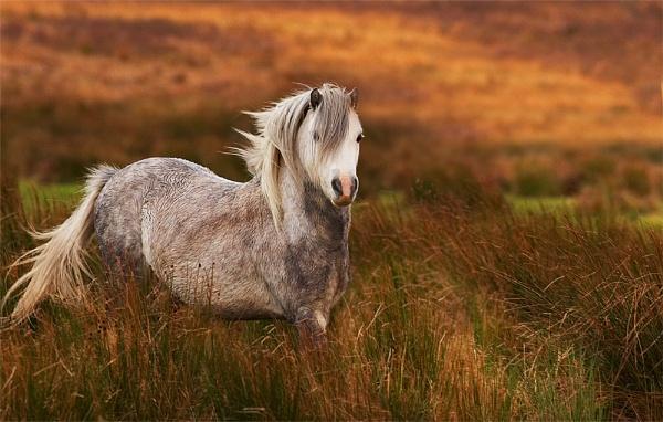 A809 Horse by conrad