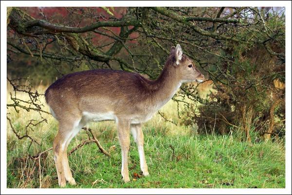 Bambi! by DerekL