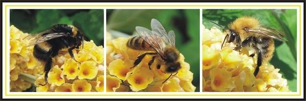 Three Bees by BarbaraR
