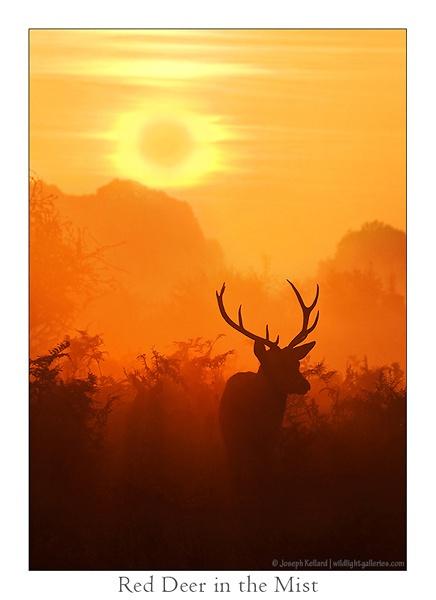 Deer in the Mist by WildLight