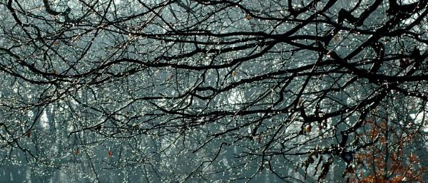 Tree Drops by Birdseye