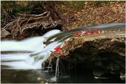 Niles creek Movement