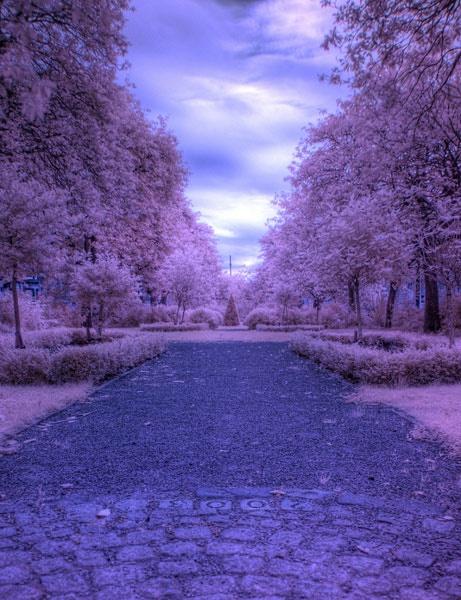 Wilton St Gardens IR by BubbaG2000