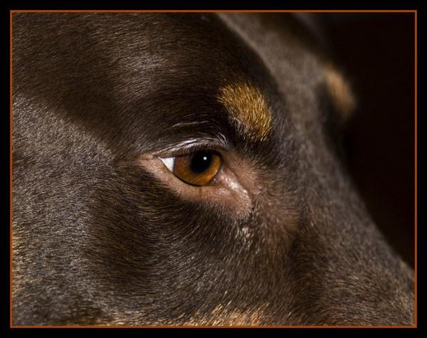 Amber Eye by hellsbells8868