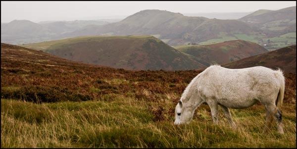 Long Mynd Pony by LinH