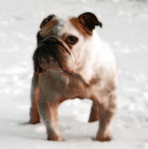 Snow by Georgias_Dad