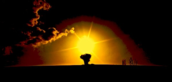 The Tree and the Sun. by Charteris