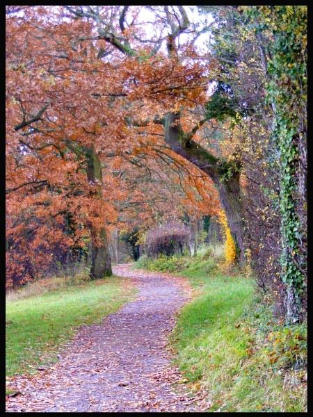 Woodland Walk by SarahKate