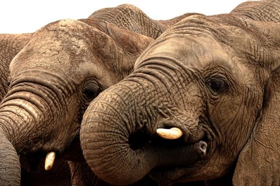 elephants 1 by linda5