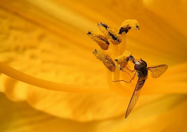 pollen fest by MacroRebel