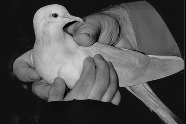 Bird in hand !!! by D80daz
