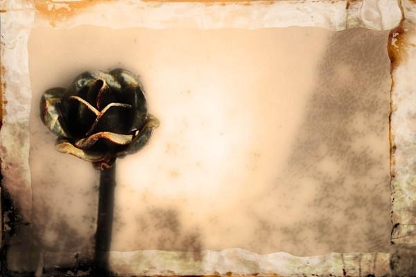 Rose of Iron