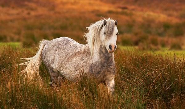 Horse 2 by conrad