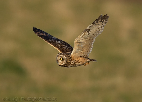 SEOwl by albi
