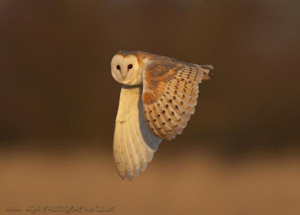 Norfolk Jewel by albi