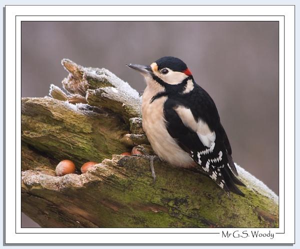 Mr & Mrs Woody by Blenkinsopp