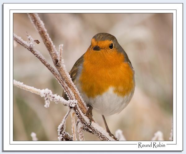Round Robin by Blenkinsopp