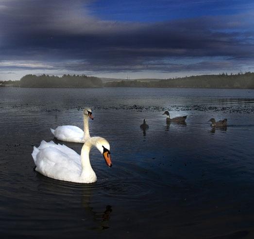 Swan Lake by hellsbells8868