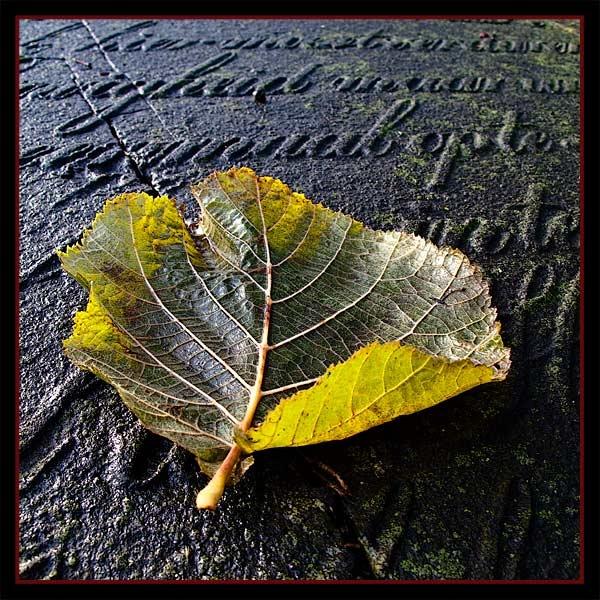Leaf 13 by Rende