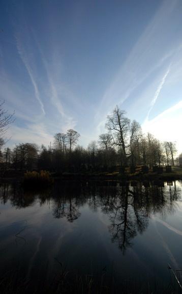 Cool Calm by Birdseye