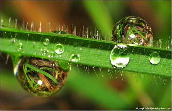 Balls of Liquid Grass by WildLight