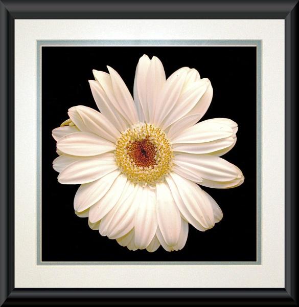 White on Black by Stuart463