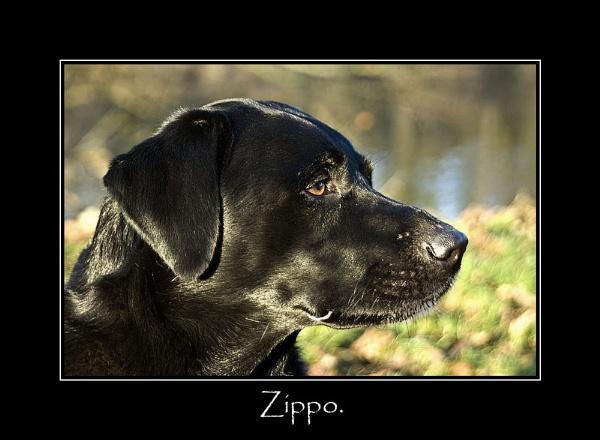 Zippo. by Scaramanga