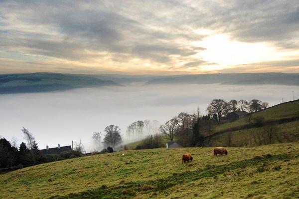 Misty Morning by HalfBeard