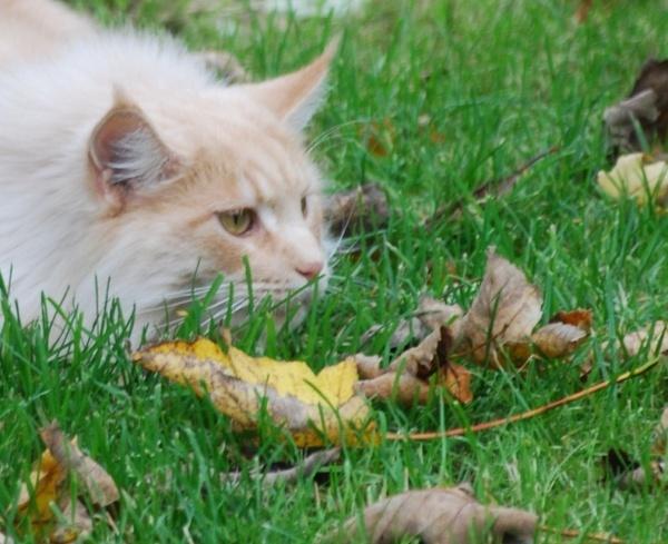 Hunting! by Lynx08
