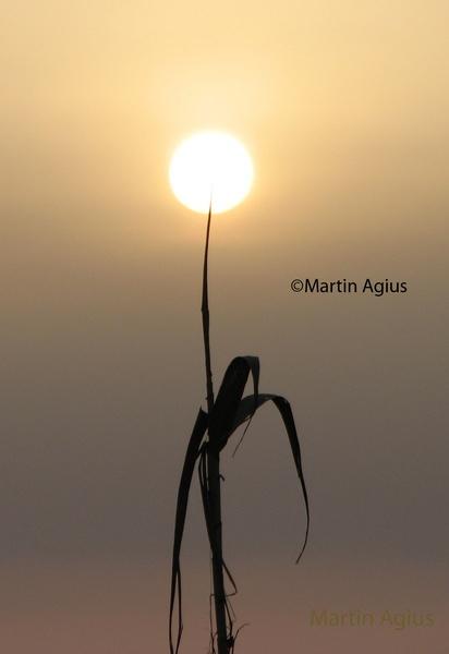 Natural Lampshade by MartinAgius
