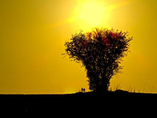 A Tree. by Charteris