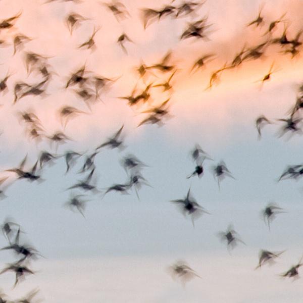 Birds in flight by richardolivermartin