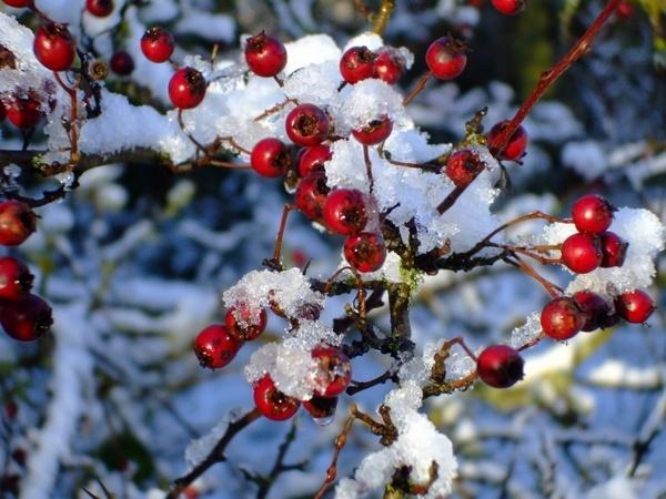 Sugar or snow? by goodone
