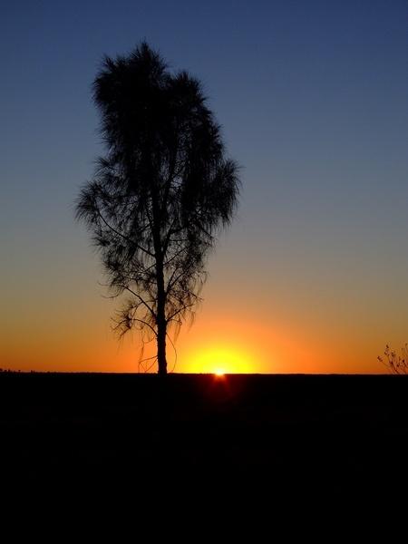 Sun Rise near Uluru by harlequinarcher