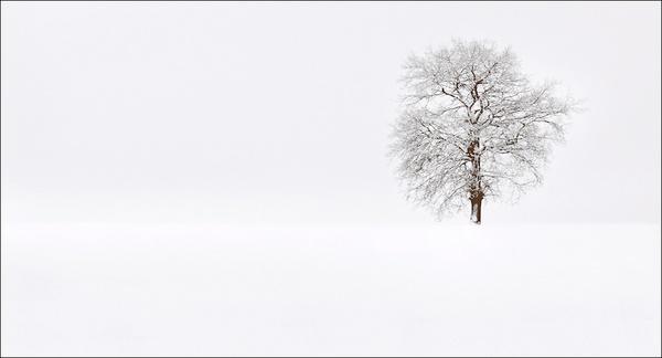 Snowtree by Kim Walton