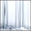 Winter Trees, Kinnordy