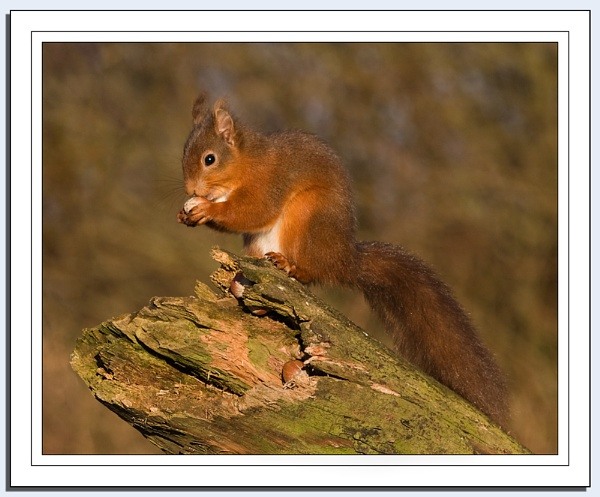 Secret Squirrel by Blenkinsopp