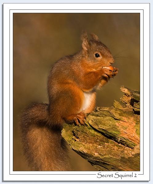 Secret Squirrel 2 by Blenkinsopp