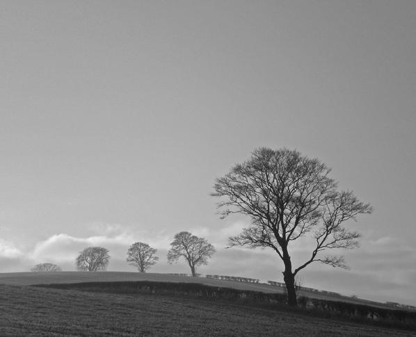 stark treeline by simbo76