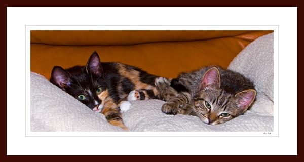 HAPPY KITTENS by JASPERIMAGE