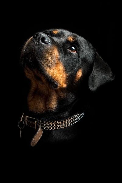 Roxy (1)